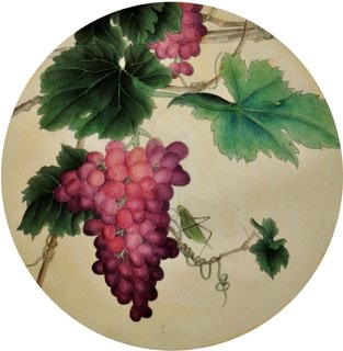 Chinese Grape Painting,38cm x 38cm,2416018-x