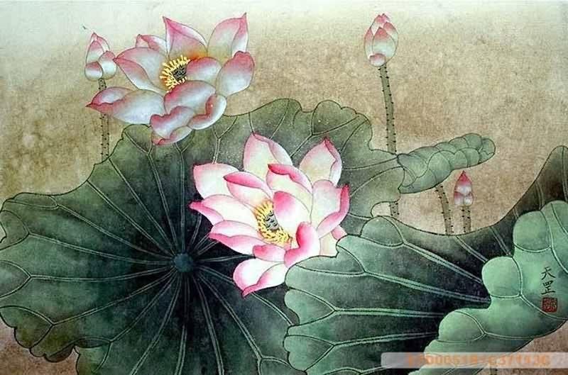 Lotus Flower Art Chinese Lotus P...