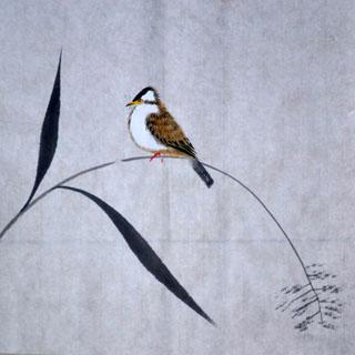 Yun Feng